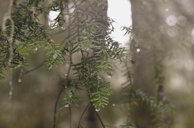 Seattle-2016-Crystal-Mountain-Foliage