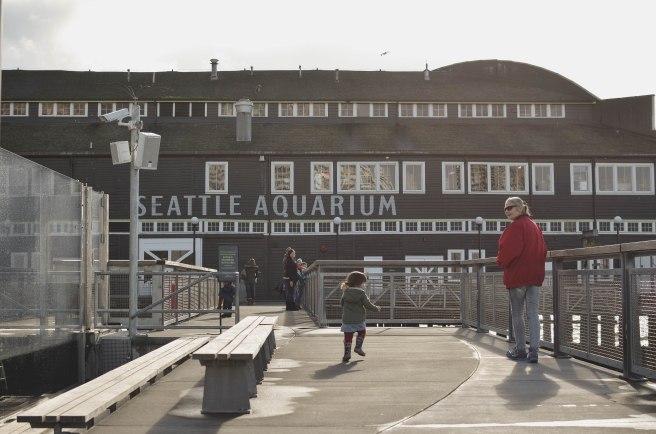 Seattle-2016-Seattle-Aquarium-Fisher-running-to-Mimi